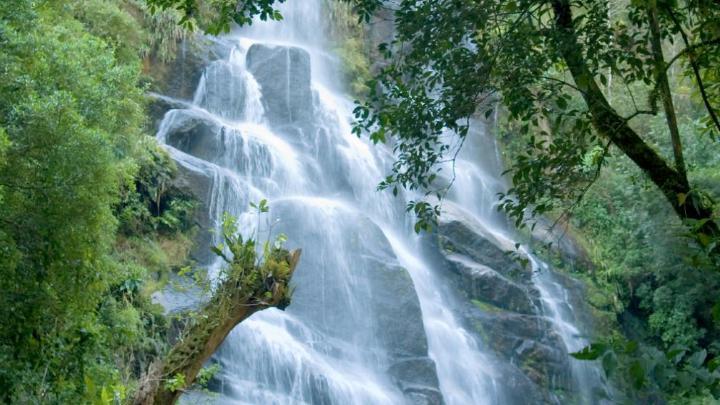 Encuentra el mejor lugar para el bosque en Itatiaia