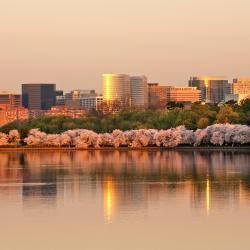 Arlington 142 hotels