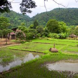 Kampong Bertam 1 hotel