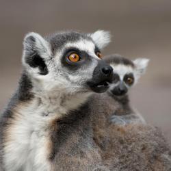 30 Best Antananarivo Hotels, Madagascar (From $20)