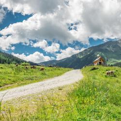 Bergheim 9 villas