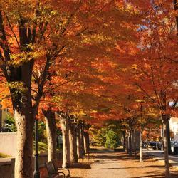Princeton 26 hotels