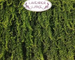 Lavender's Lodge Hotel