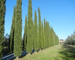 Azienda Agrituristica Le Betulle