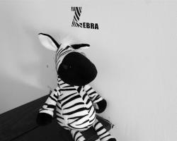 Mr. Zebra Hostel