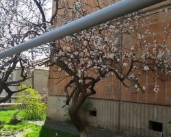 Modern Apartment in Yerevan