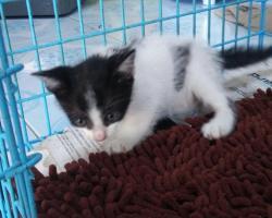 Dream Cat-Cher Hostel