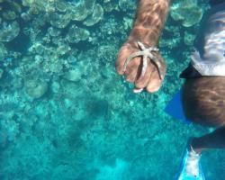 Maldives Seashine