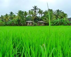 Rice Villa