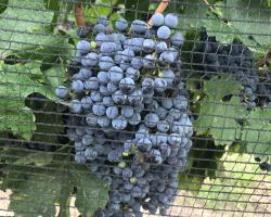 Chaglasian Wine & Suites