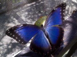 The Butterfly EcoPark, San Pedro (рядом с городом Poptún)