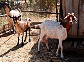 Agriturismo Quaglia, Roccadaspide