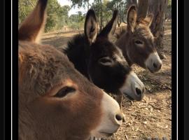 Donkey Tales Farm Cottages, Talbot