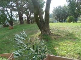 mas des oliviers