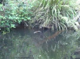 Platypus Ponds, Cabbage Tree Creek (Orbost yakınında)