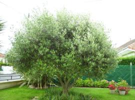 L 'olivier
