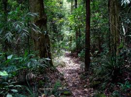 Springbrook Lyrebird Retreat