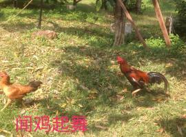 happy orchard farm
