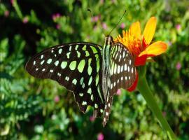Dream Butterfly Garden Boutique Villa