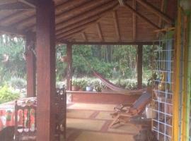 Bambu del Quindio