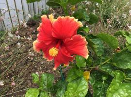 Hibiscus Hideaway, Witta (Booloumba yakınında)