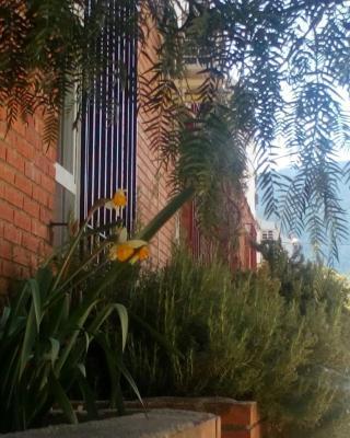 Casa Pinos