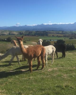 Falcon's Rise Alpaca Farm