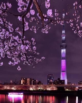 上野彩虹村