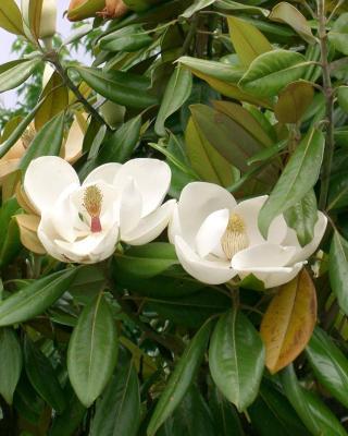 Bastide de Magnolia