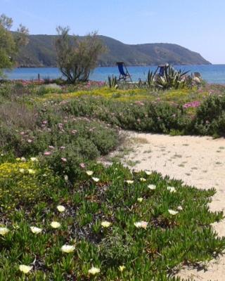 Il giardino di sabbia