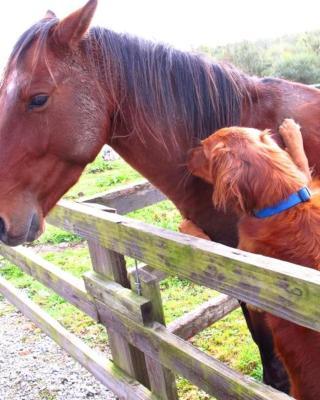 Clondanagh B&B and Farm-on-the-Lake