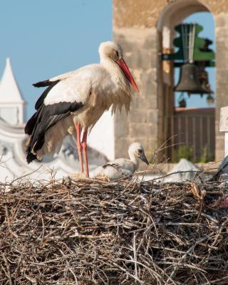 Stork Hostel