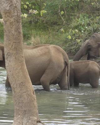 Janaka Safari Homestay