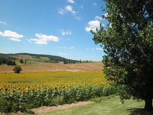 Domaine de la Vigne