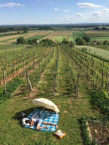 Vineyard Living