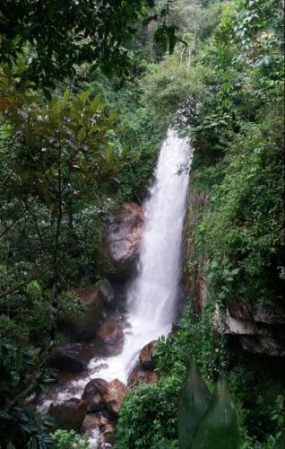Chales Bamboo Jungle