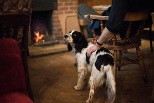 The 10 Best Wiltshire Pet Friendly Hotels Hotels That Accept Pets