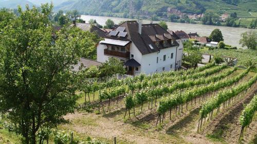 Weinbau und Gästezimmer Pammer