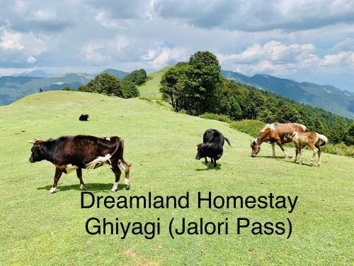 DreamLand Home stay (JALORI PASS)