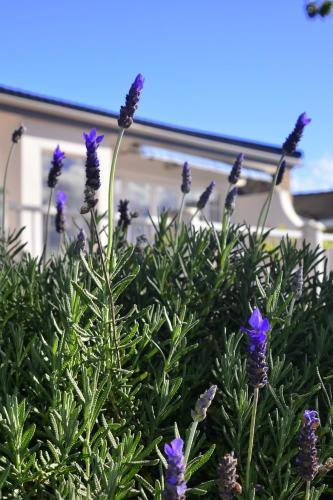 Lavender Terrace B&B