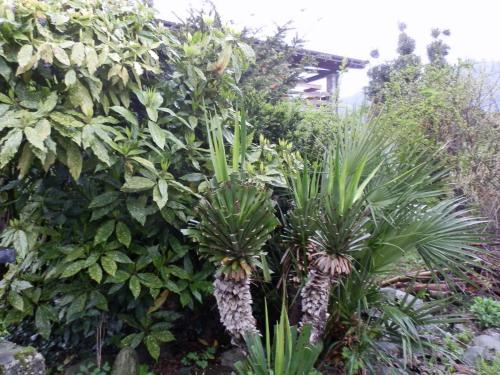 La casa del giardino