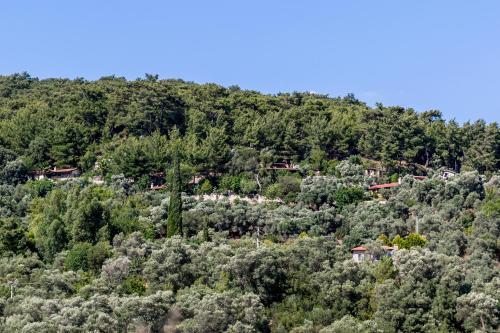 Terra Villaları