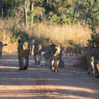 Mawimbi Bush Camp