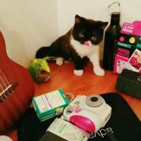 Cat And Design Apartment