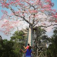 Paradise Amazon Tambopata Ecolodge
