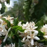Hostal Flor del Café