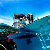 Turtle Bay Eco Resort