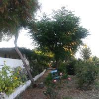 Olive Tree Farm