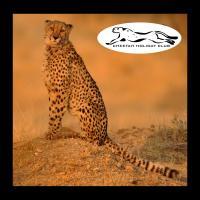 Cheetah Holiday Club