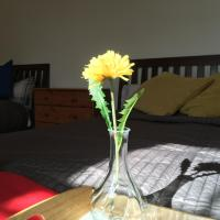 Sunny Amore flat